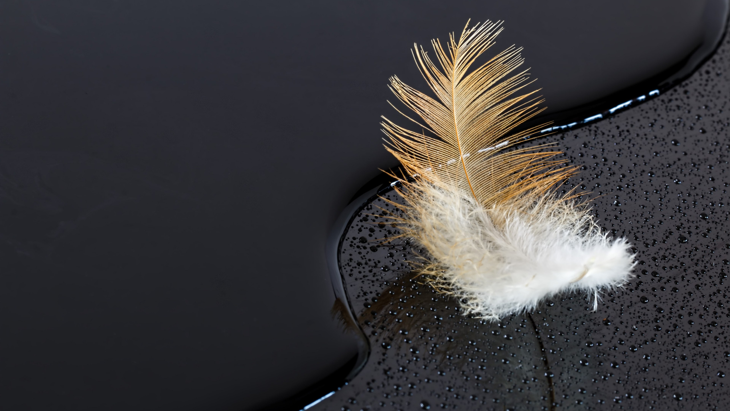 Dark surface with a feather on water wallpaper 2560x1440