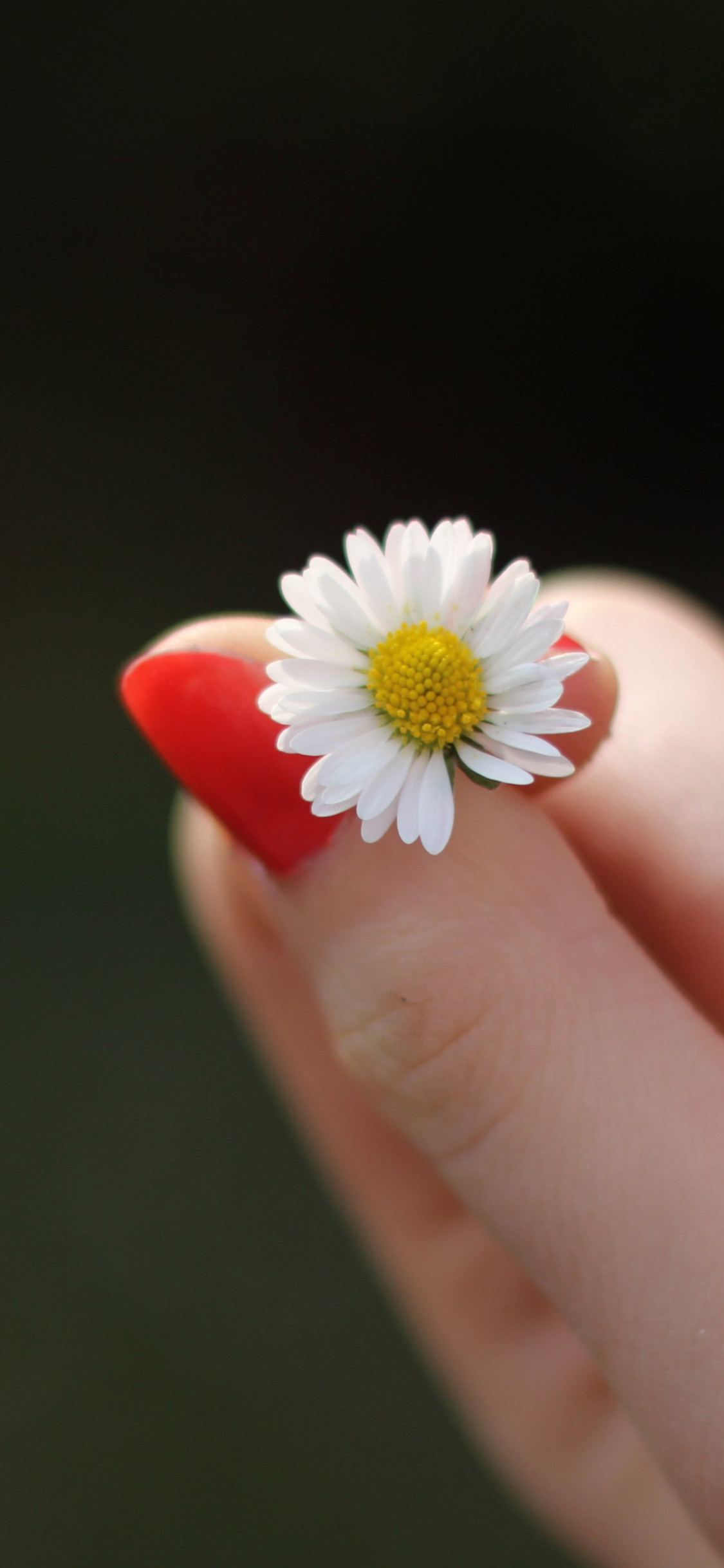 Girl with red nails and a daisy flower wallpaper 1125x2436