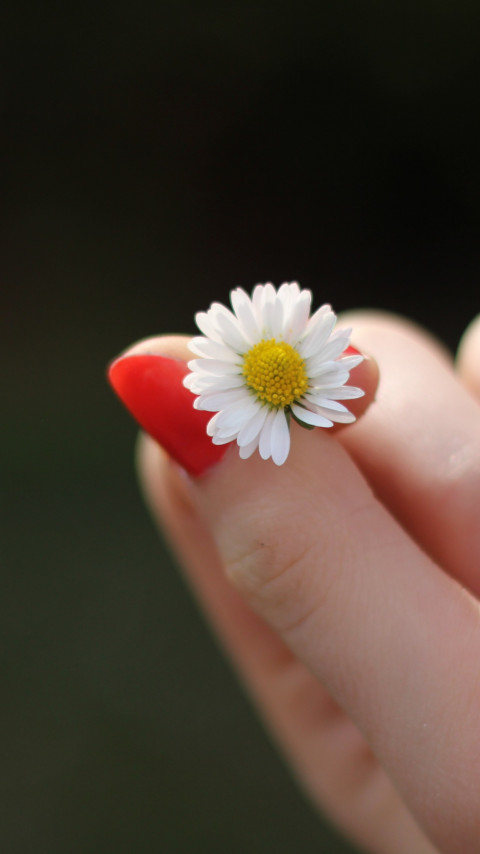 Girl with red nails and a daisy flower wallpaper 480x854