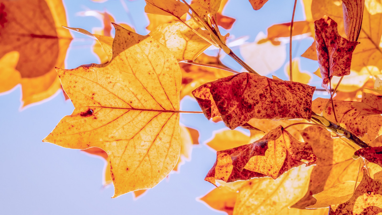 Best Autumn leaves wallpaper 1600x900