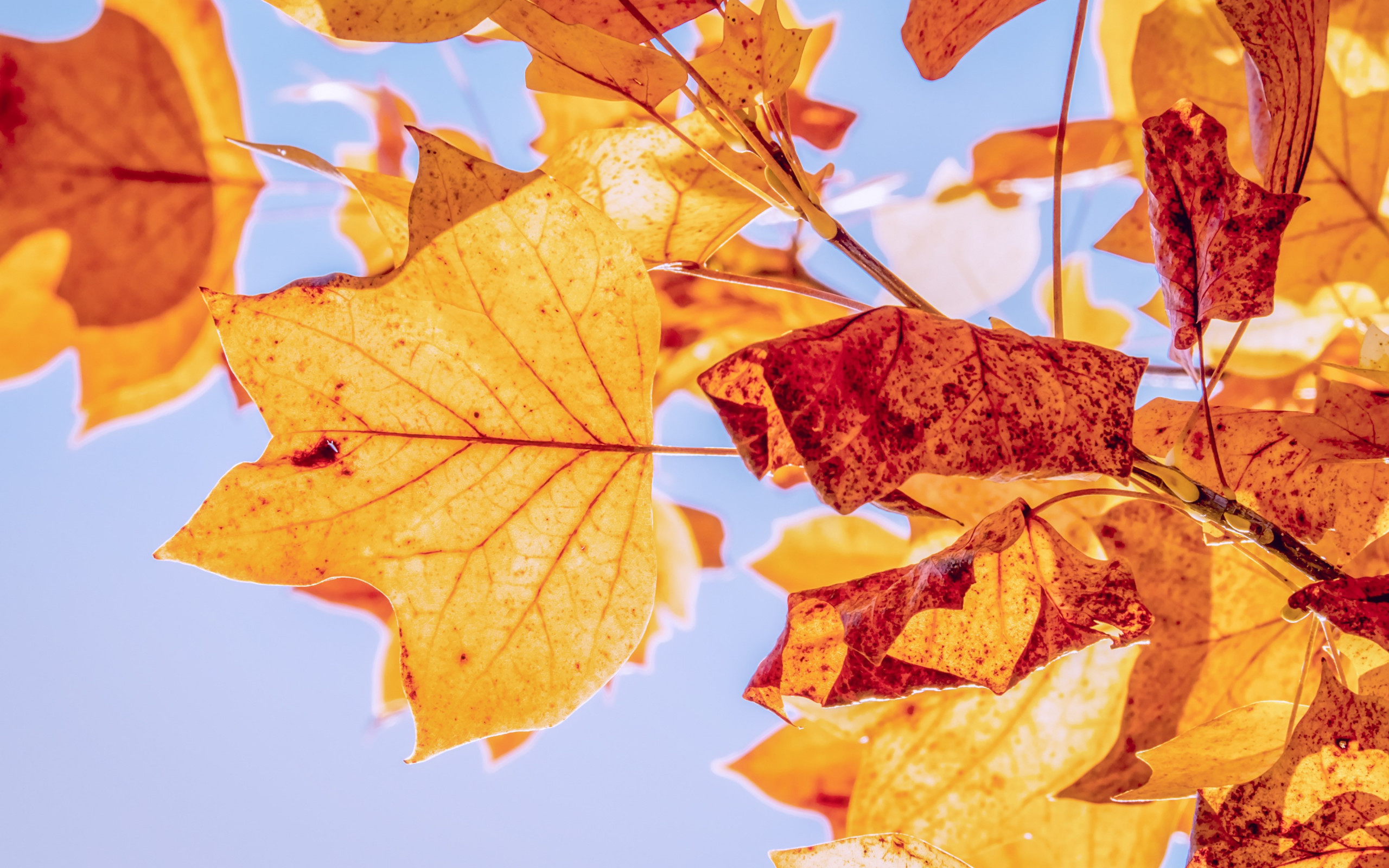 Best Autumn leaves wallpaper 2560x1600