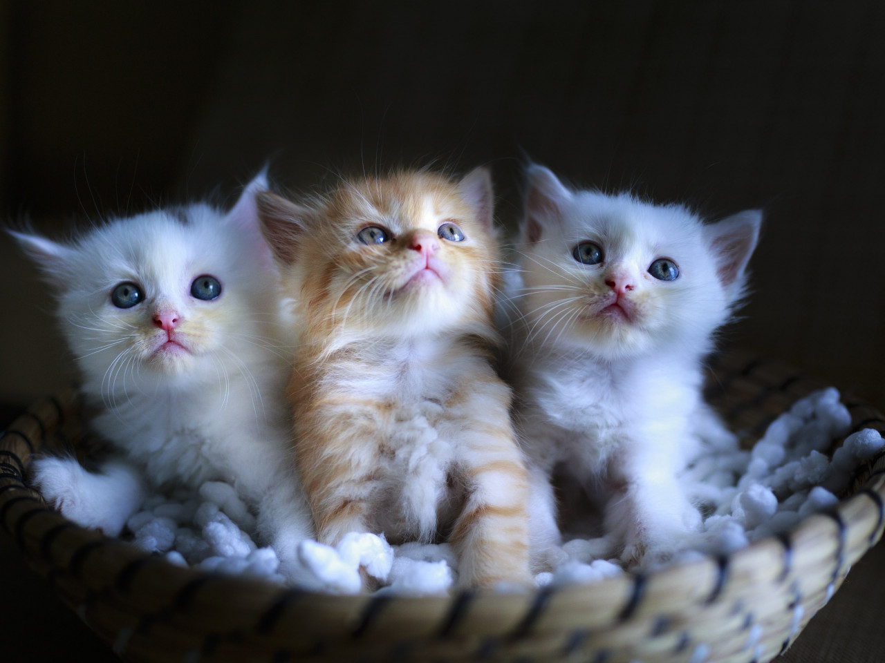 Three cute kittens wallpaper 1280x960