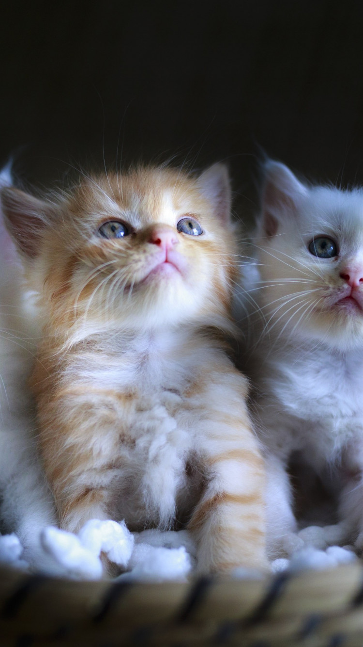 Three cute kittens wallpaper 750x1334