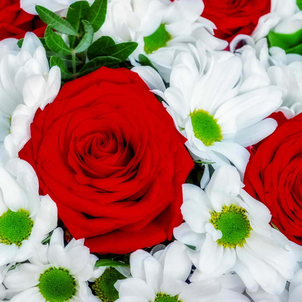 Roses and daisies bouquet wallpaper 1024x1024