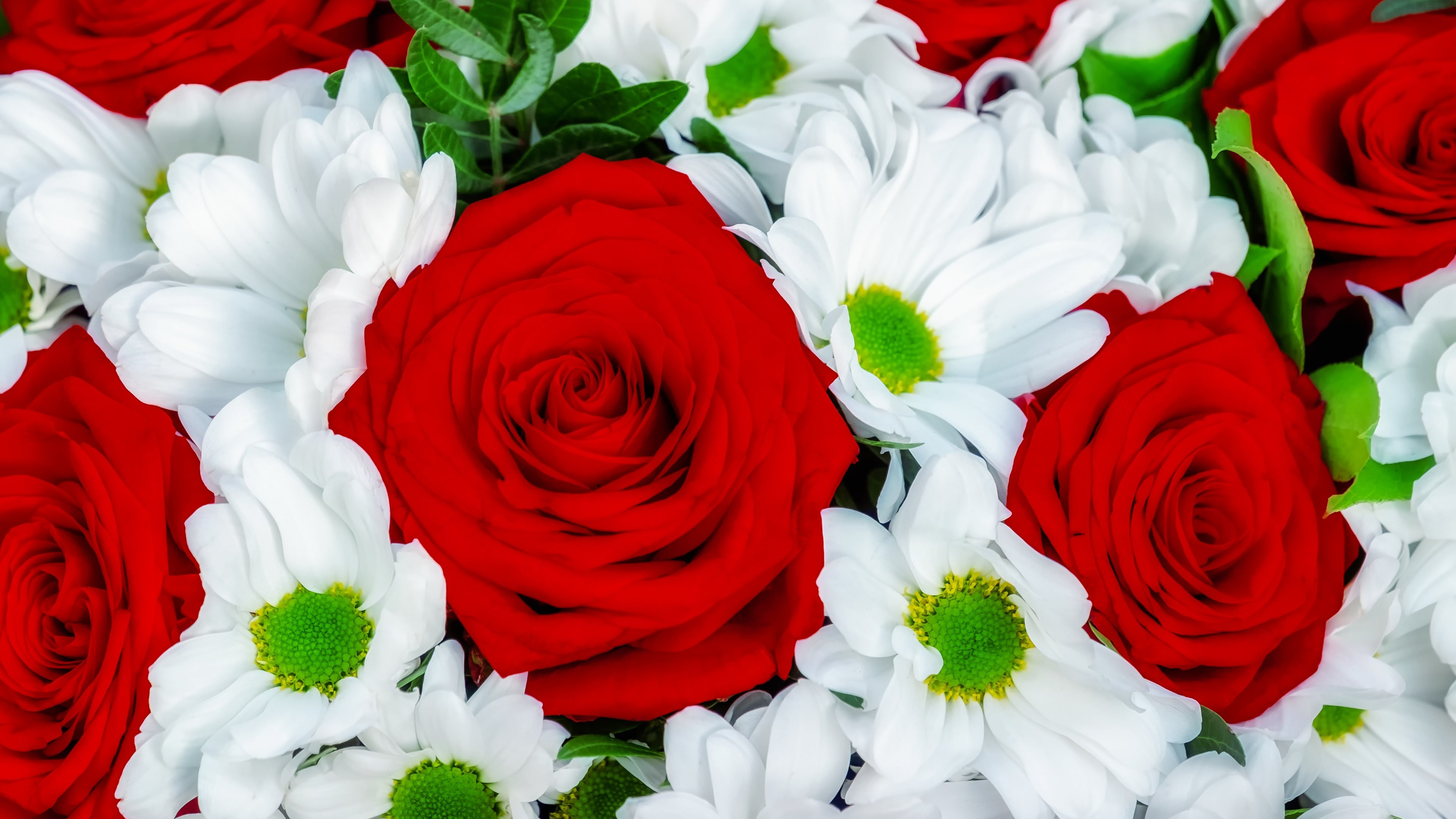 Roses and daisies bouquet wallpaper 3840x2160