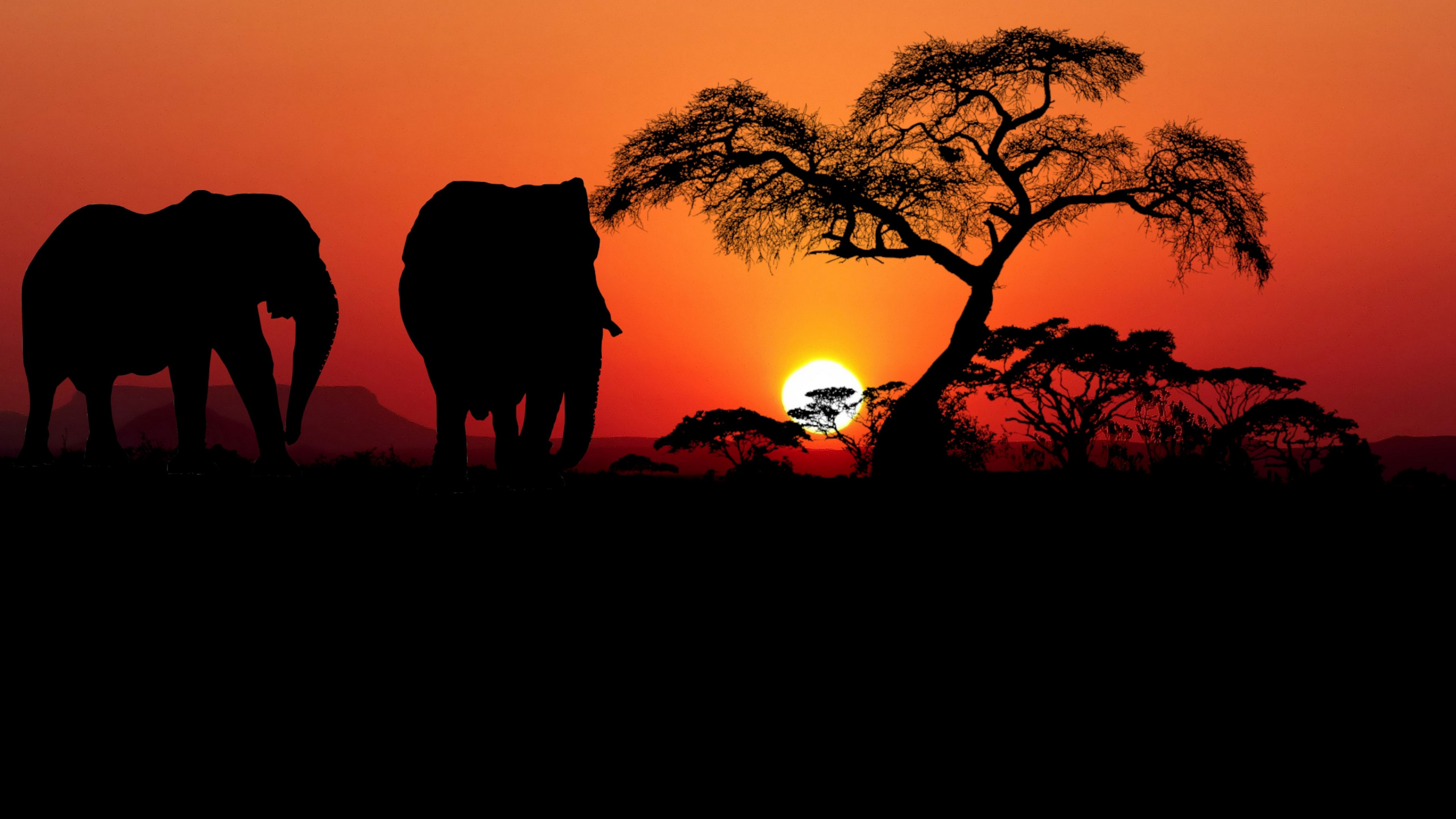 Sunset in Savanna wallpaper 2560x1440
