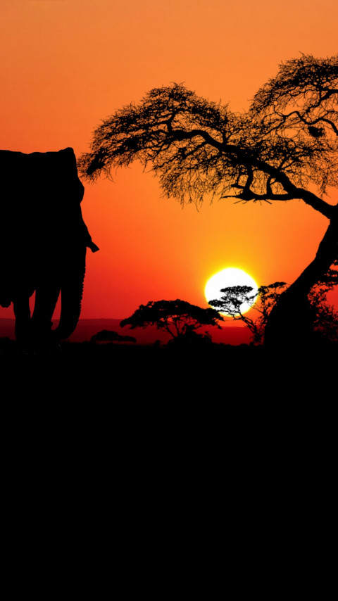 Sunset in Savanna wallpaper 480x854