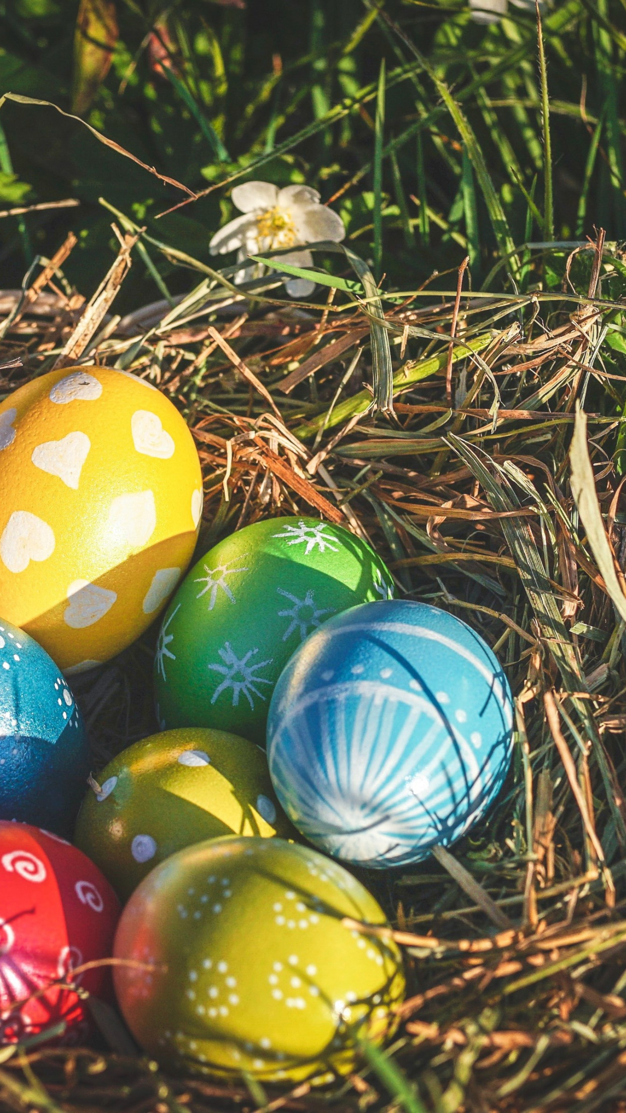 Easter eggs 2019 wallpaper 1242x2208