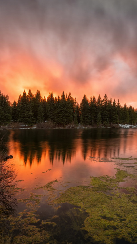 Colorado Ablaze sunset wallpaper 480x854