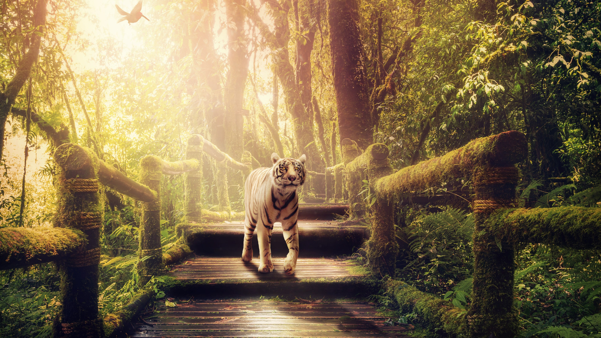 Download Wallpaper The Tiger Of Jungle 1920x1080