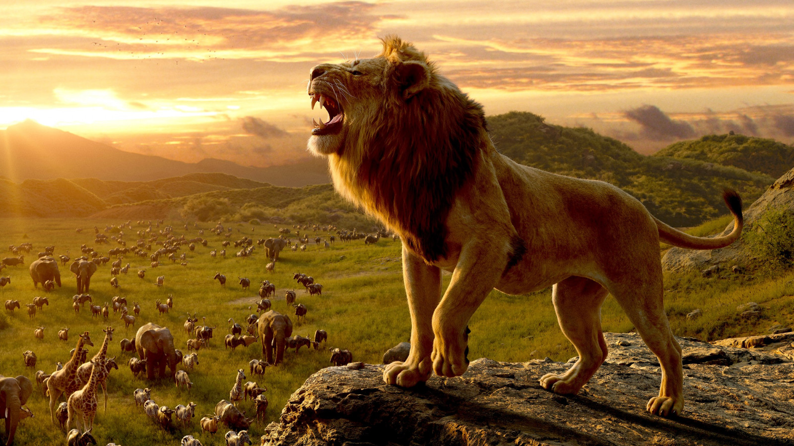 Simba, the lion king wallpaper 1600x900