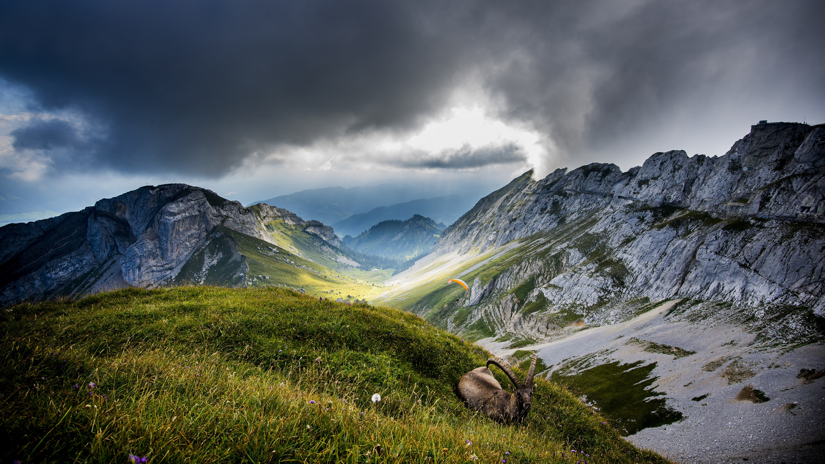Ibex on Mount Pilatus wallpaper 2880x1620