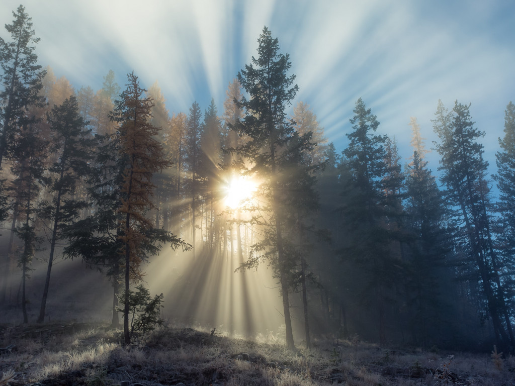 Sun rays through forest trees wallpaper 1024x768