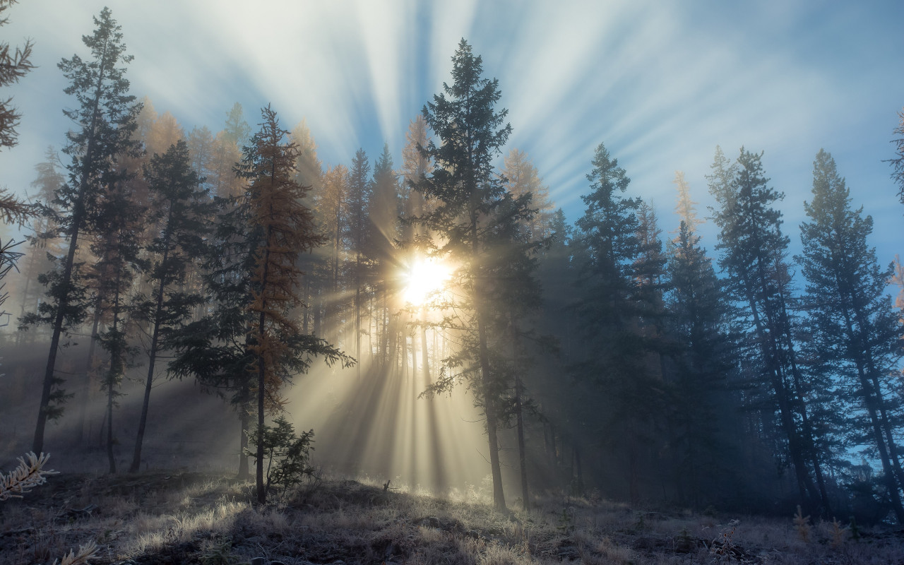 Sun rays through forest trees wallpaper 1280x800