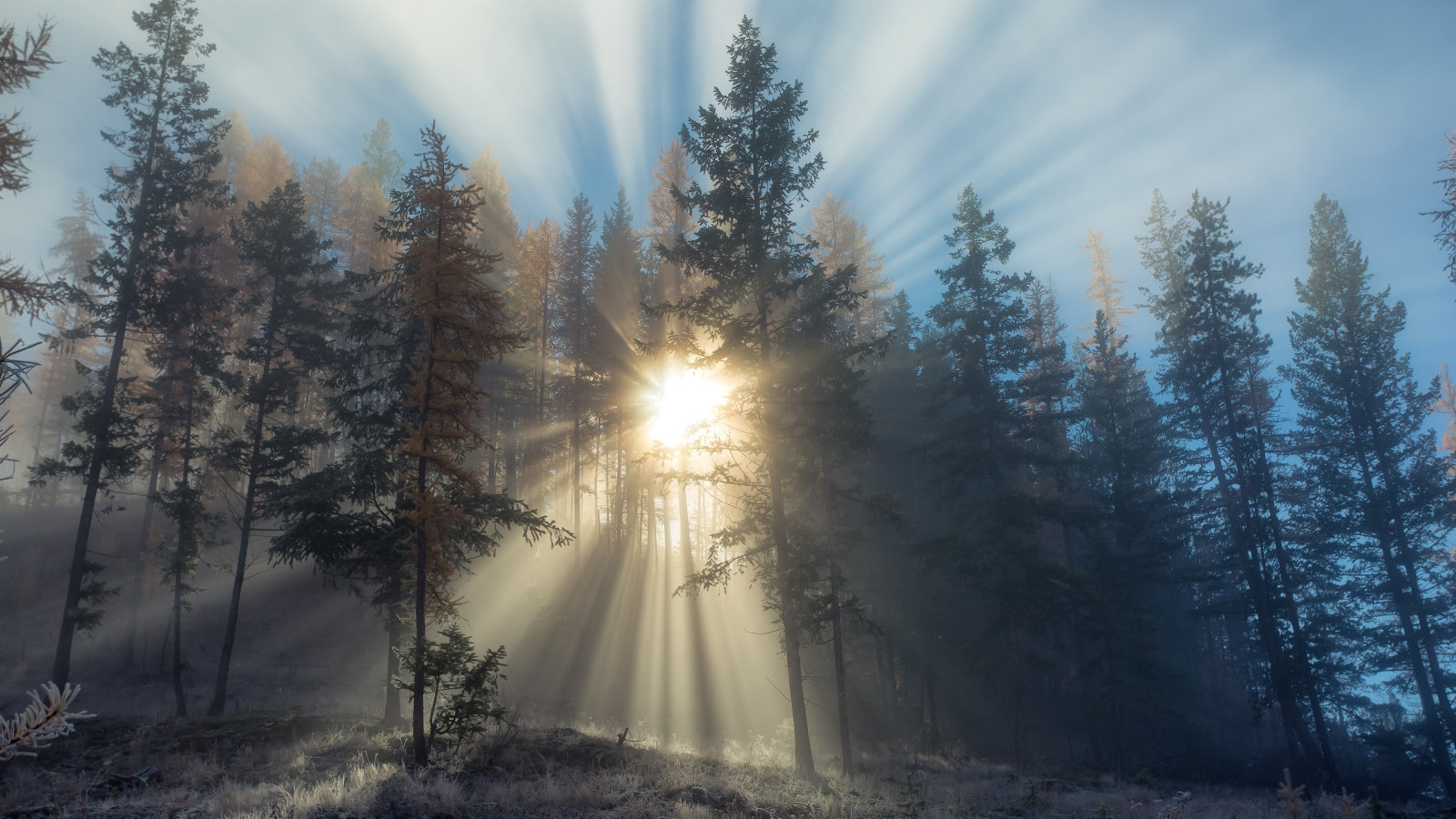 Sun rays through forest trees wallpaper 1600x900