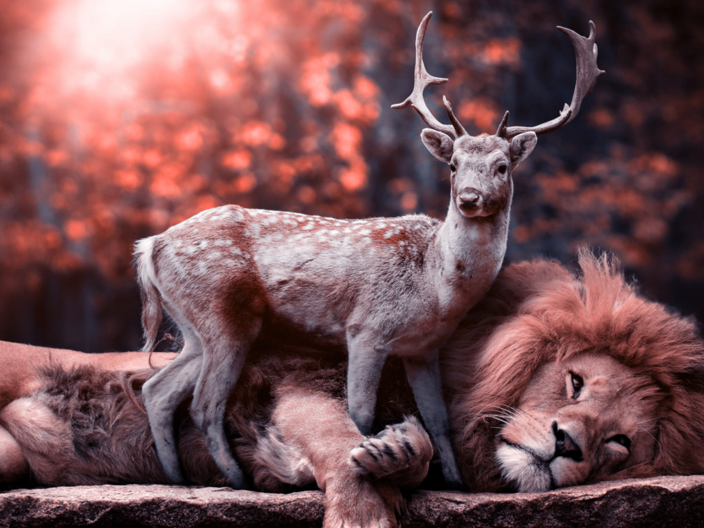 The lion and the deer wallpaper 1024x768