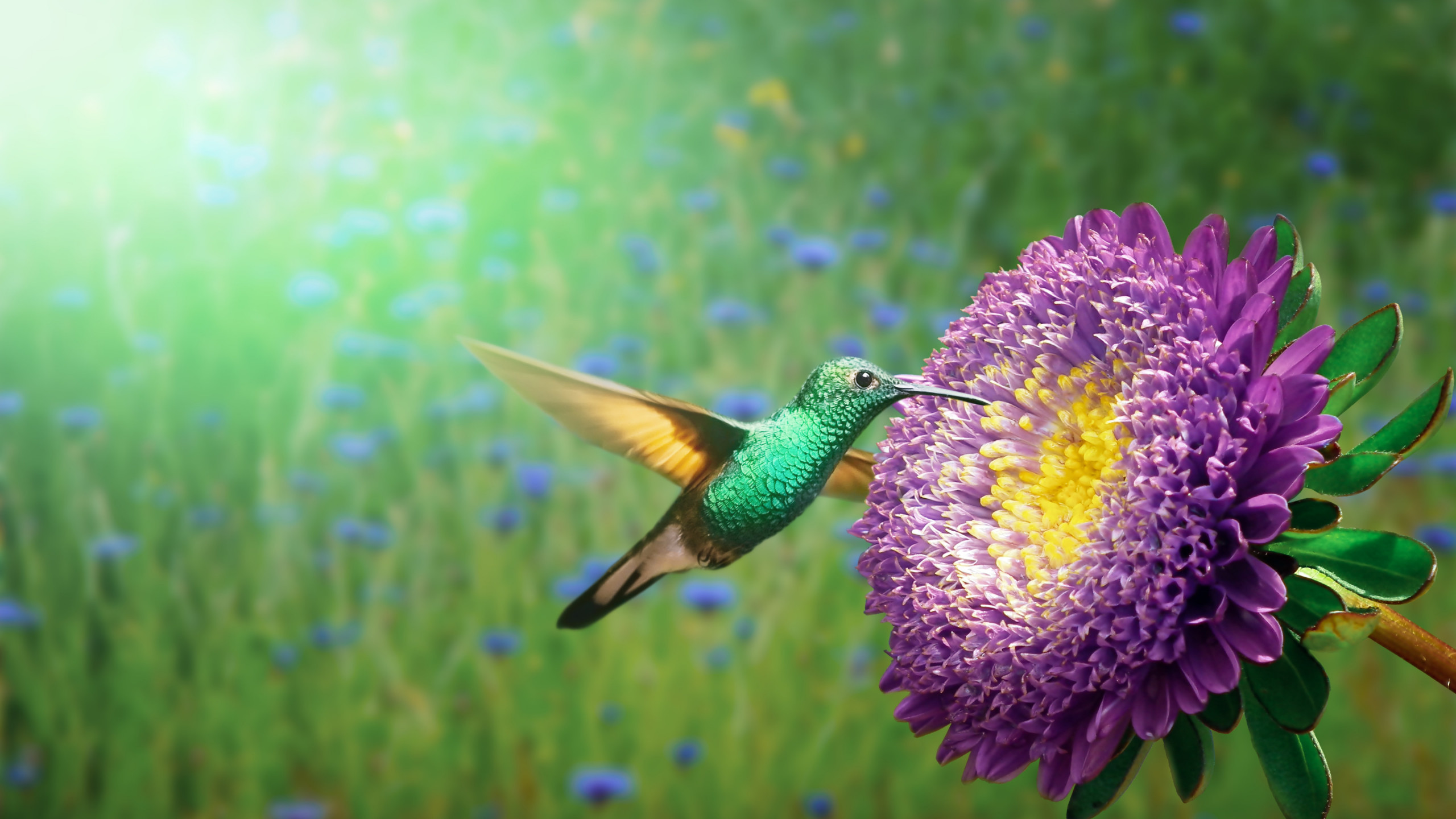 Hummingbird wallpaper 2560x1440