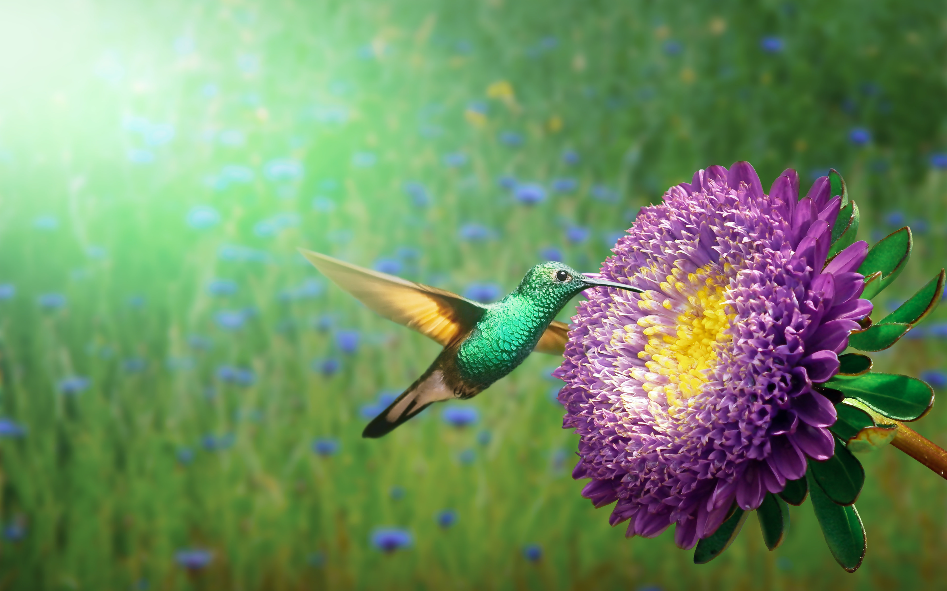 Hummingbird wallpaper 3840x2400