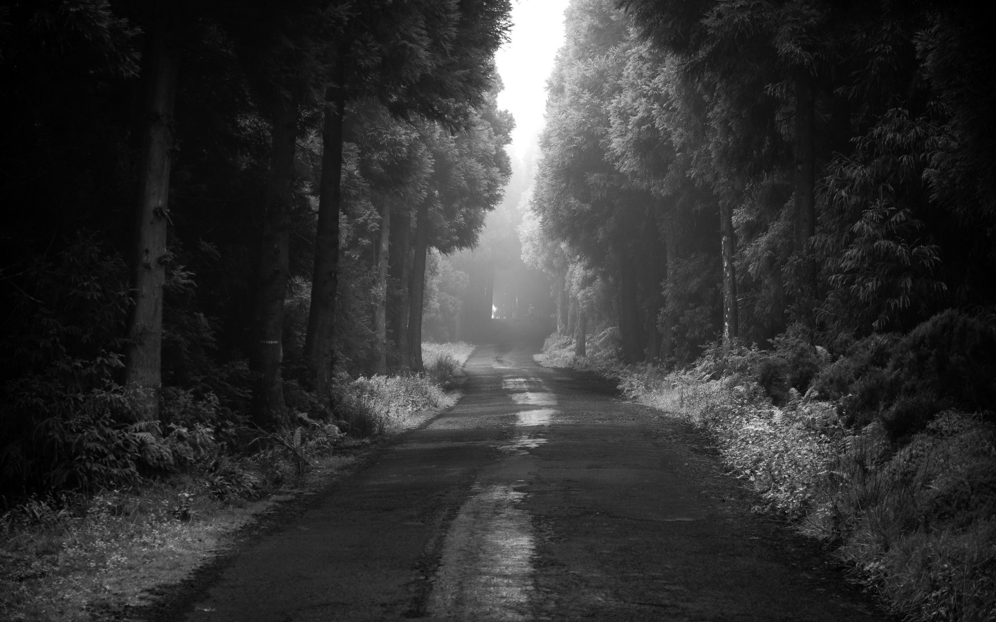 Road thru the dark forest wallpaper 1440x900
