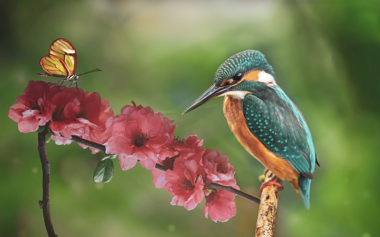 Kingfisher and the butterfly wallpaper 1280x800