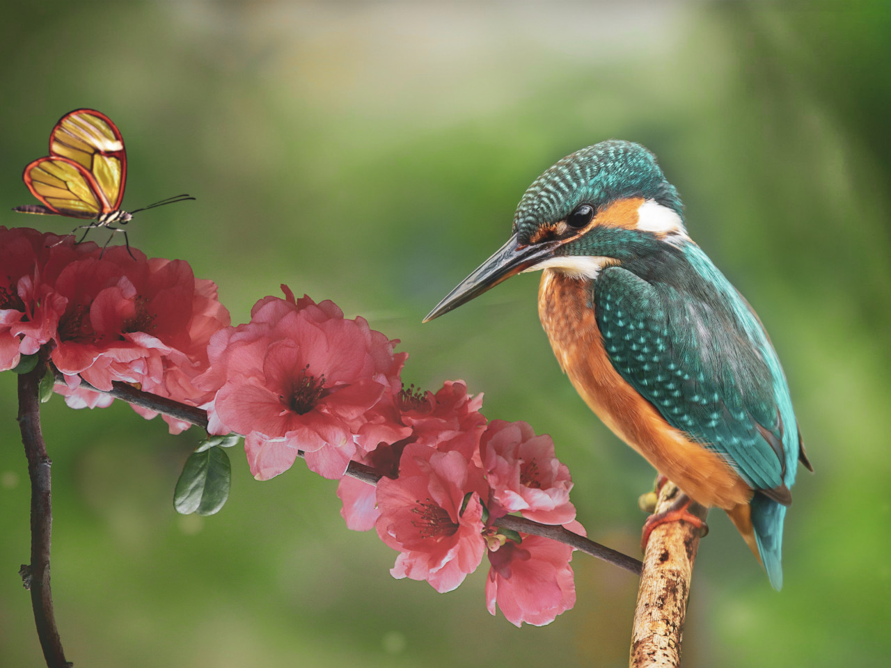 Kingfisher and the butterfly wallpaper 1280x960