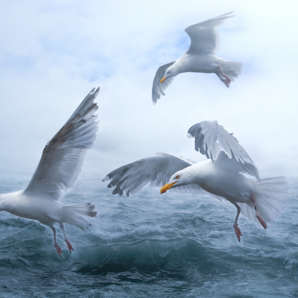 Seagulls above sea waves wallpaper 1024x1024