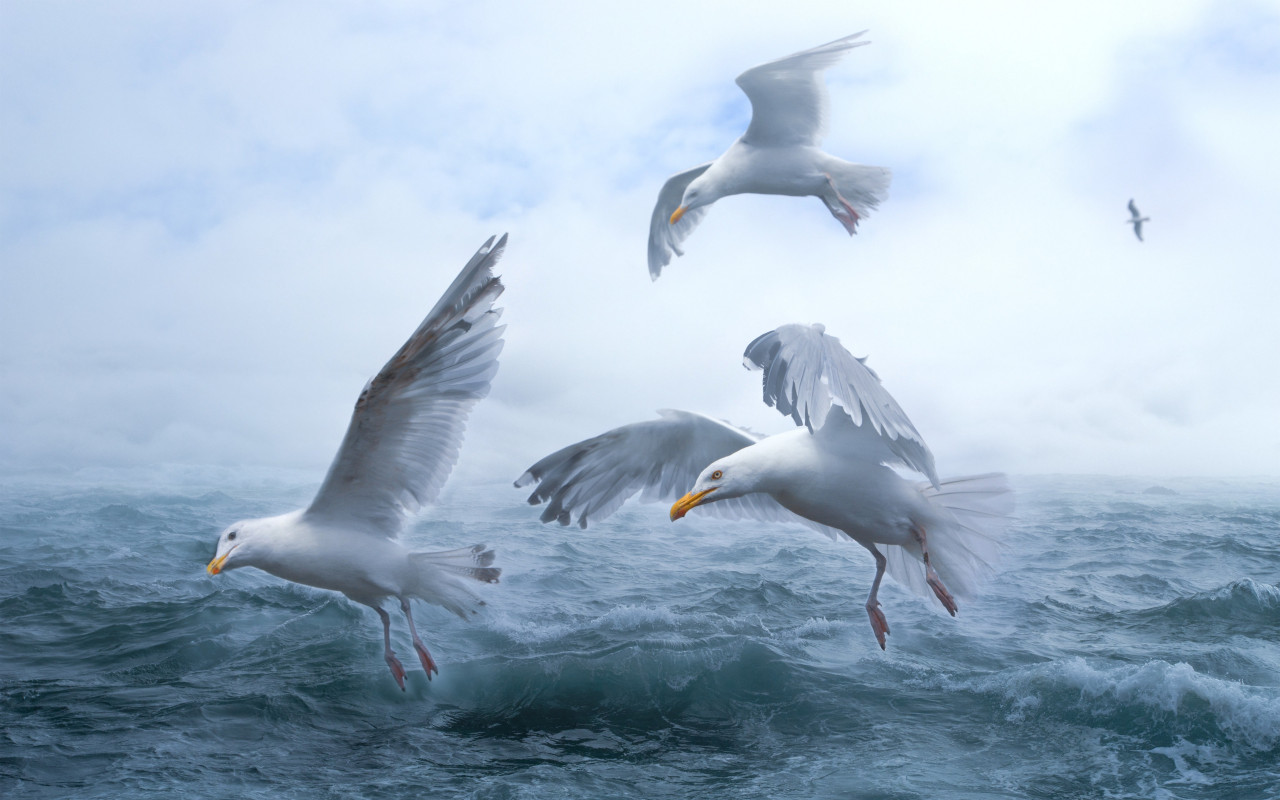Seagulls above sea waves wallpaper 1280x800