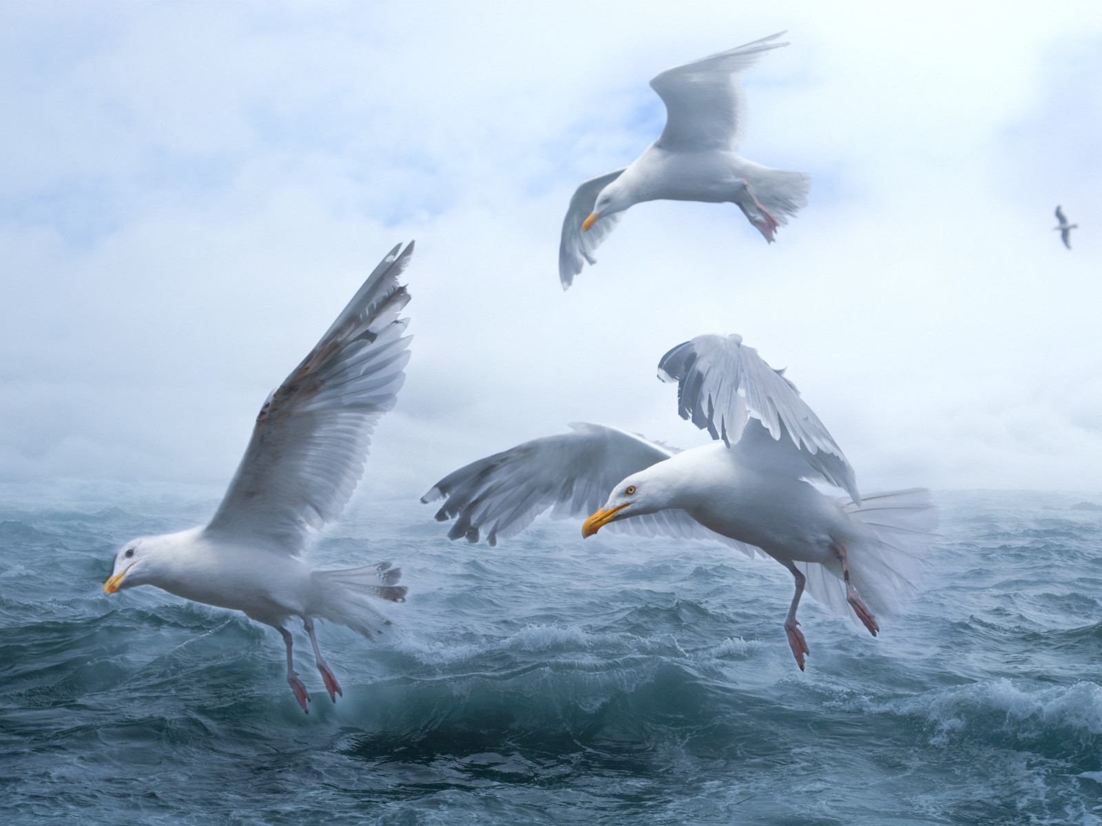 Seagulls above sea waves wallpaper 1600x1200