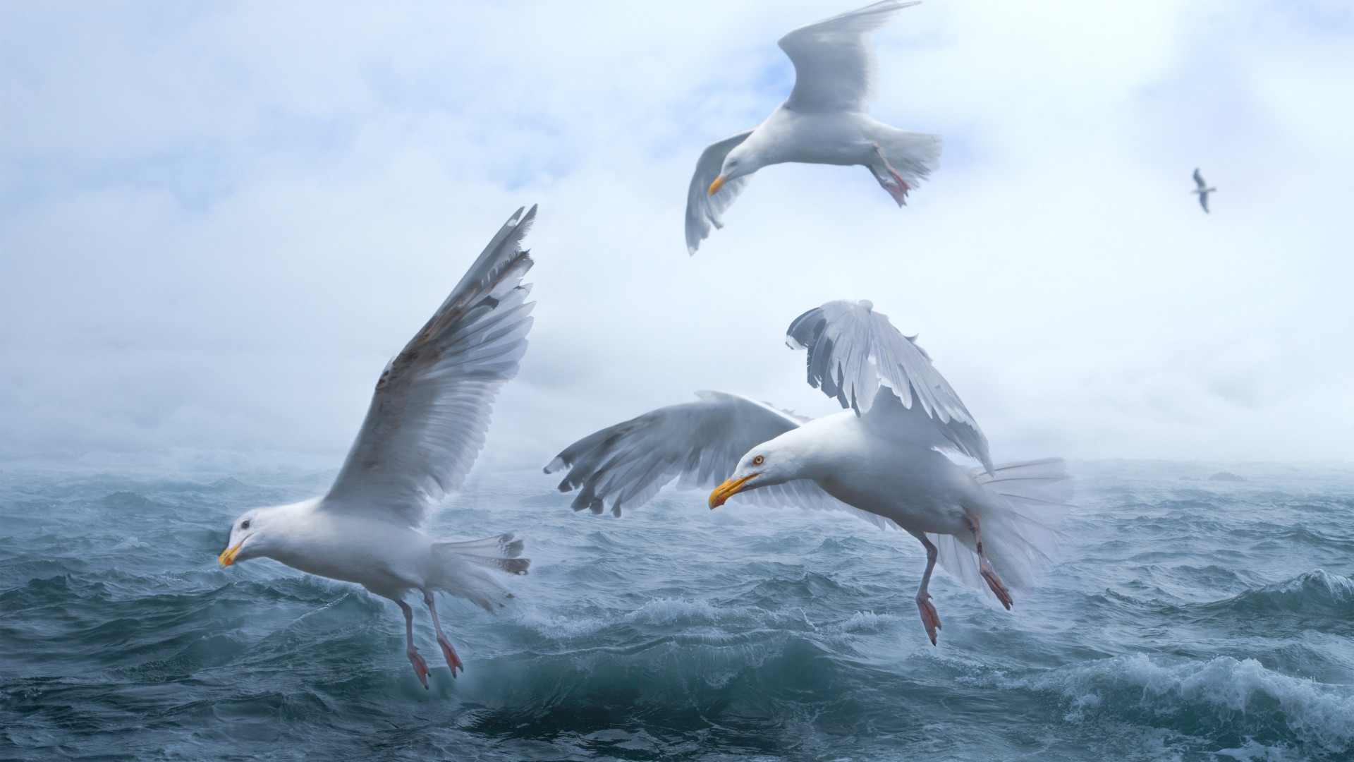 Seagulls above sea waves wallpaper 1920x1080