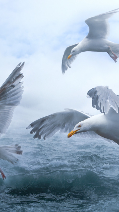 Seagulls above sea waves wallpaper 480x854