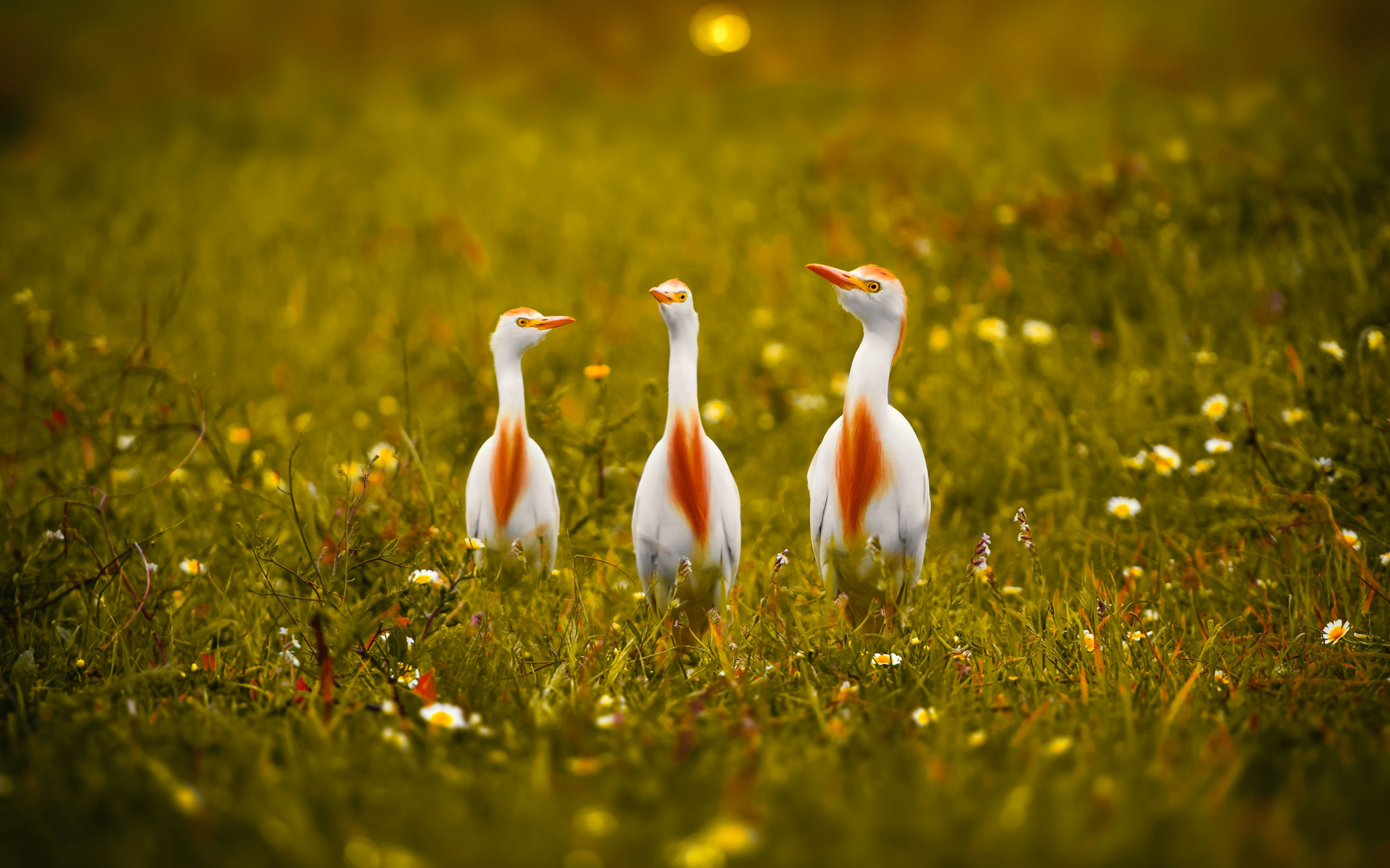 White and orange storks wallpaper 2880x1800