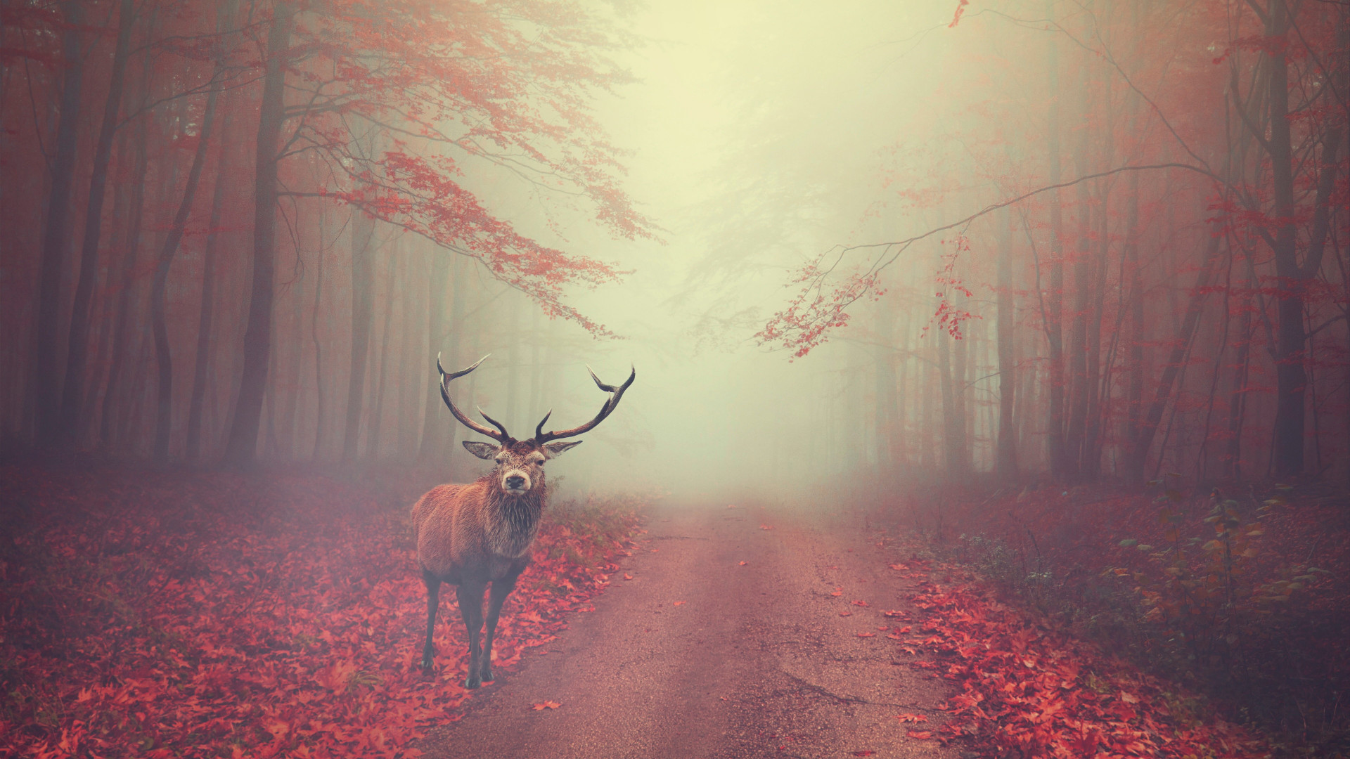 Beautiful stag in the Autumn landscape wallpaper 1920x1080