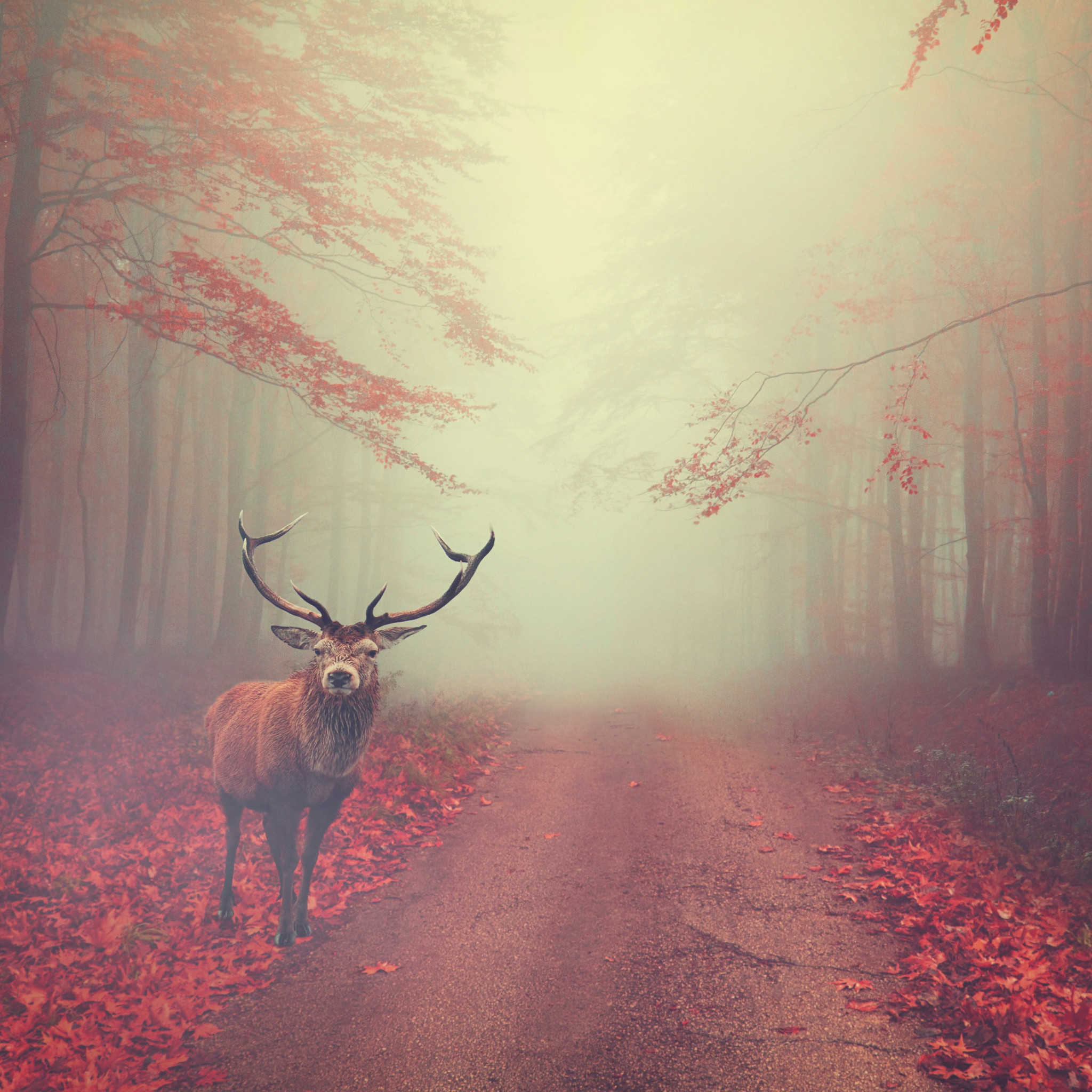 Beautiful stag in the Autumn landscape wallpaper 2048x2048