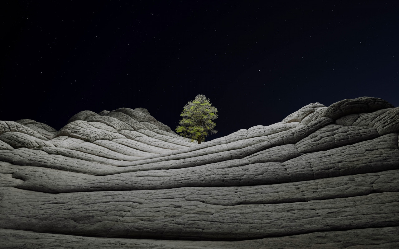 Desert tree in the cold night wallpaper 1280x800
