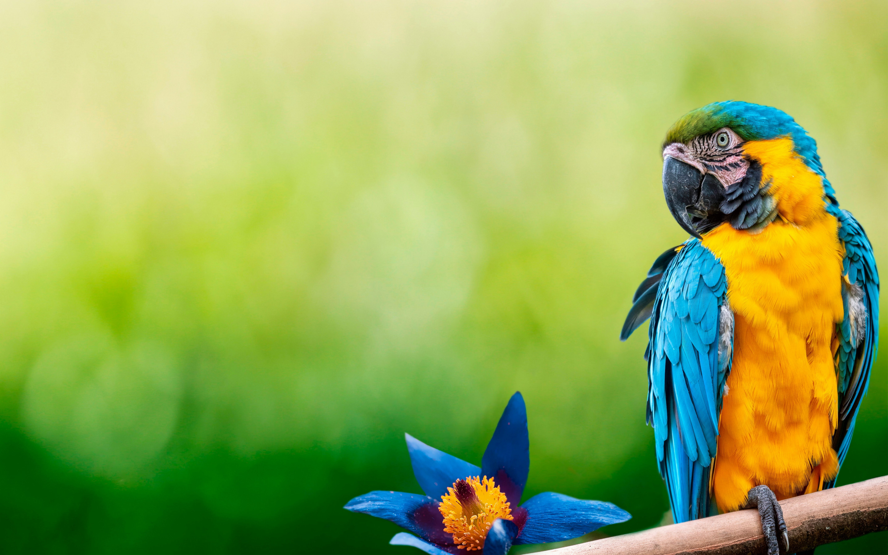 Beautiful Macaw parrot wallpaper 2880x1800